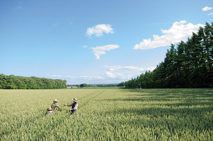 Иностранцев привлекут для работ в сельскохозяйственном секторе в Японии