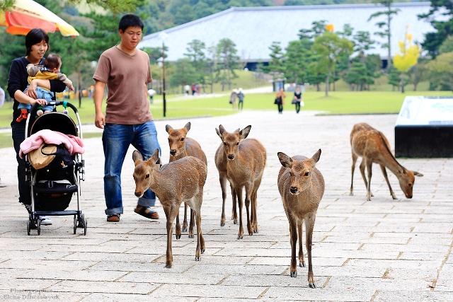 Япония занимает 15-е место в мире по привлечению иностранных туристов