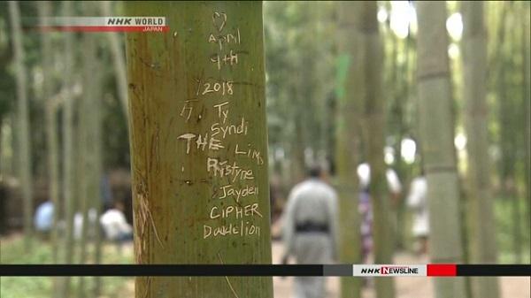 100 бамбуковых деревьев в Араcияма подверглись вандализму