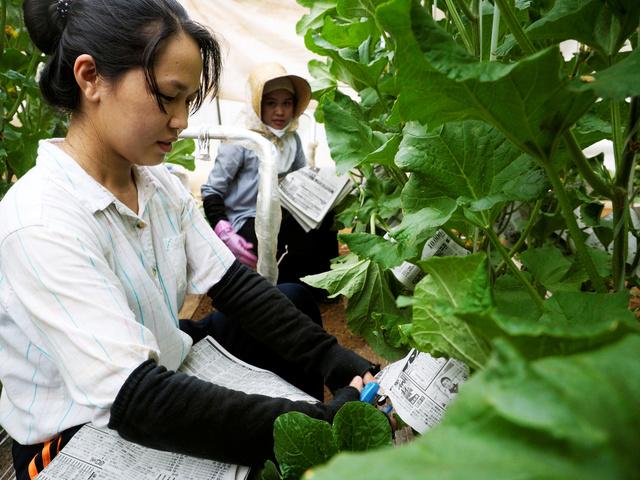 Япония выдаст 1ю рабочую визу по новой системе 2 камбоджийским женщинам