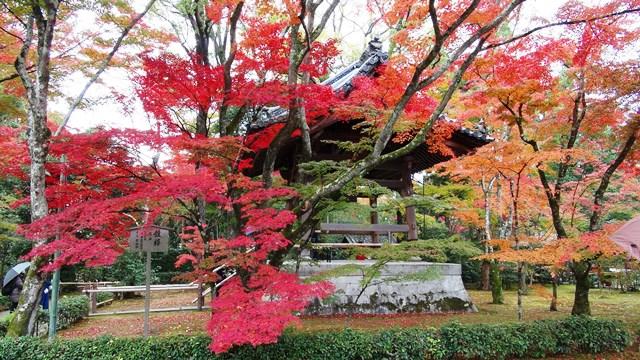 В храме в Киото запретили фотографировать в местах любования осенними пейзажами